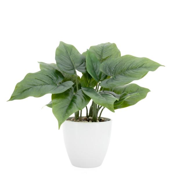 Villa Potted Plant - Calla Leaf